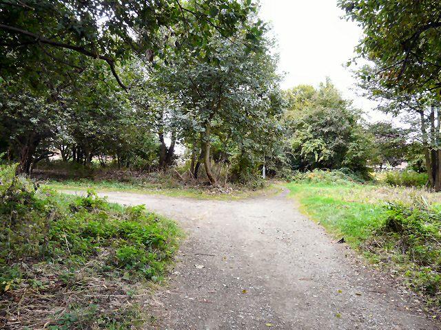 Newmarket Grove
