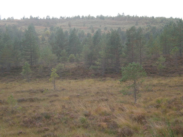 Woodland/moorland near Migdale Junction