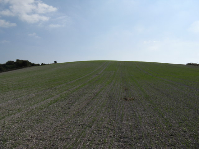 New winter crop on Church Hill