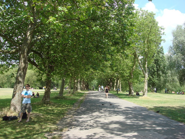 Tree lined avenue, Hampstead Heath
