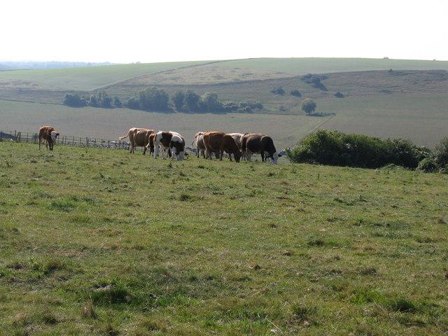 Grazing land north of Tolmare Farm