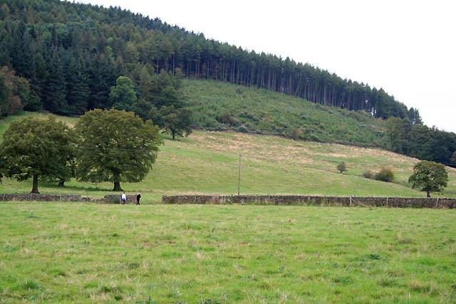 Felled Area in Lindop Wood