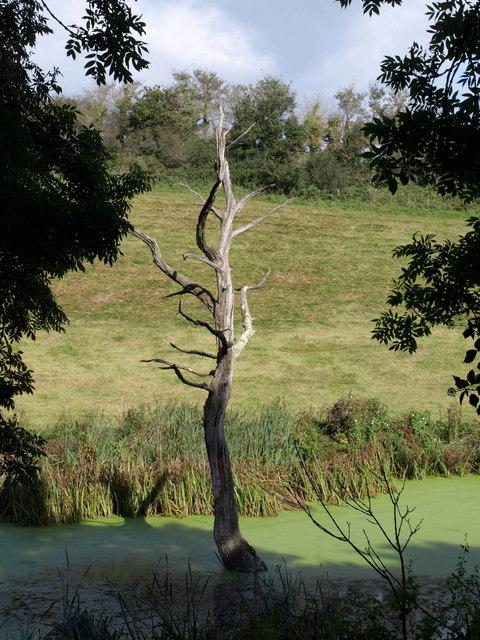 Swamp thing, Okenbury