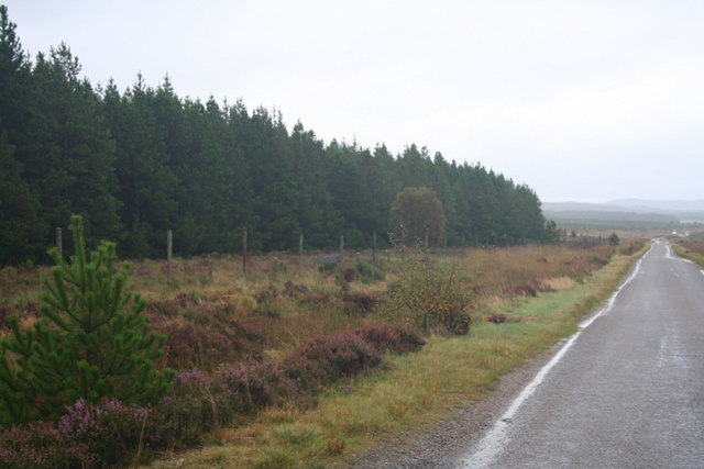The woods of Leathad na Cloiche Moire