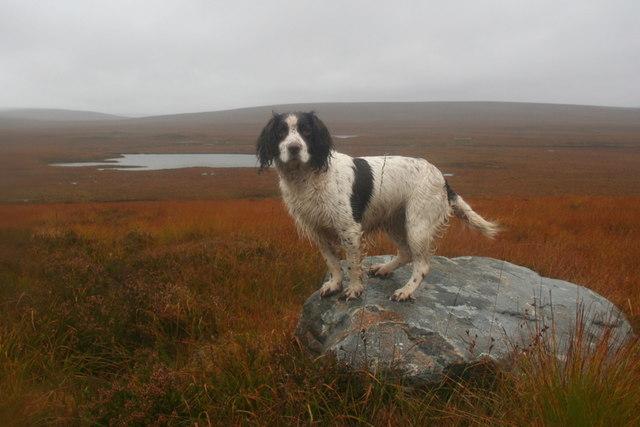 Moorland around Loch Gaineamhach