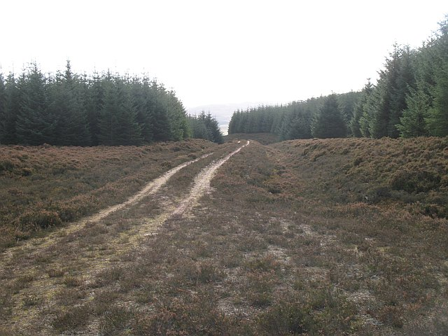 Forest road, Creag Tombane