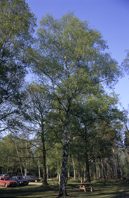 Open Woodland near Thorndon Countryside Centre