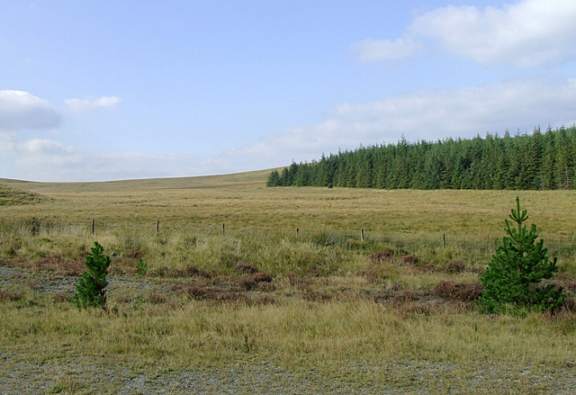 The edge of the Tywi Forest in Ceredigion
