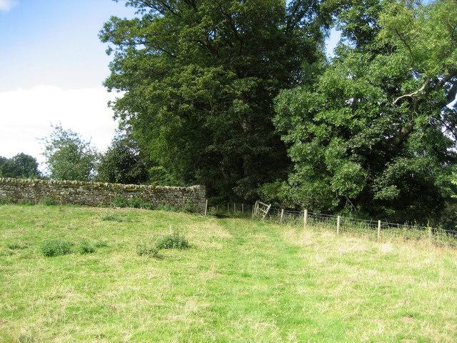 Teesdale Way near Woden Croft