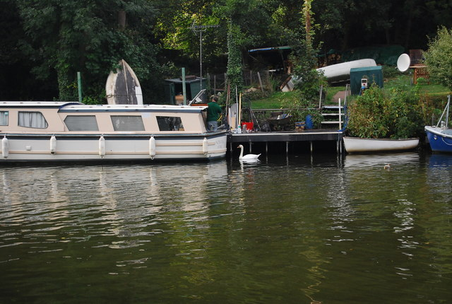 Swan by a moored boat, River Medway
