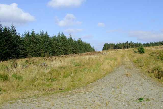 Trackway into the Tywi Forest, Esgair Hir, Ceredigion