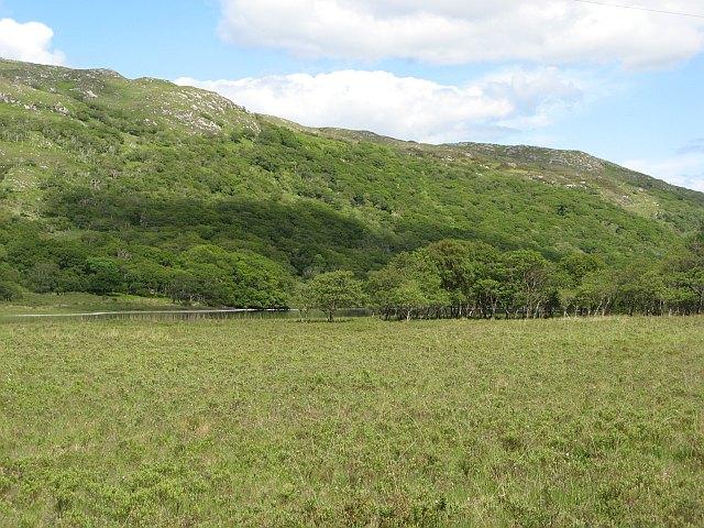 Marshland, head of Loch Arienas