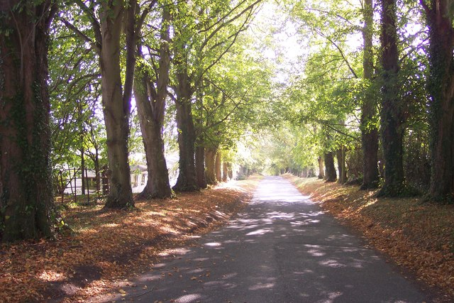 Access road toward Three Chimneys