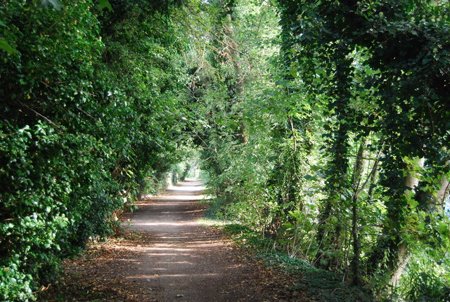 Tree lined path along the River Medway