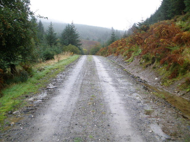 Track in Corlarach Forest