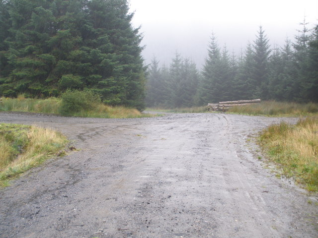 Junction of tracks in Corlarach Forest