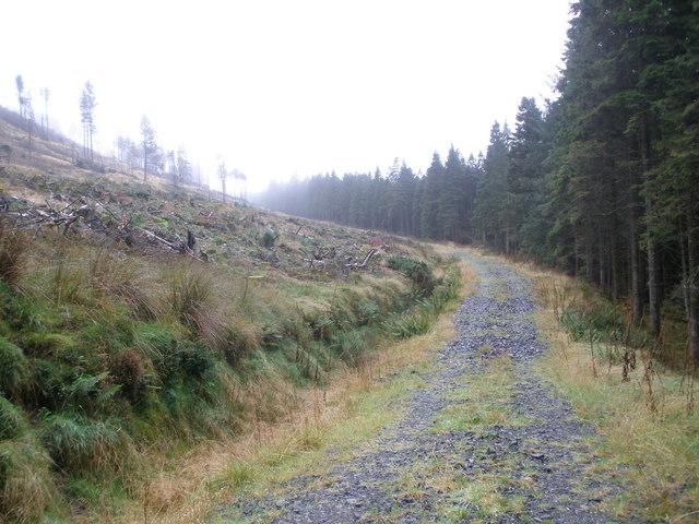 Forest track in Glen Fyne