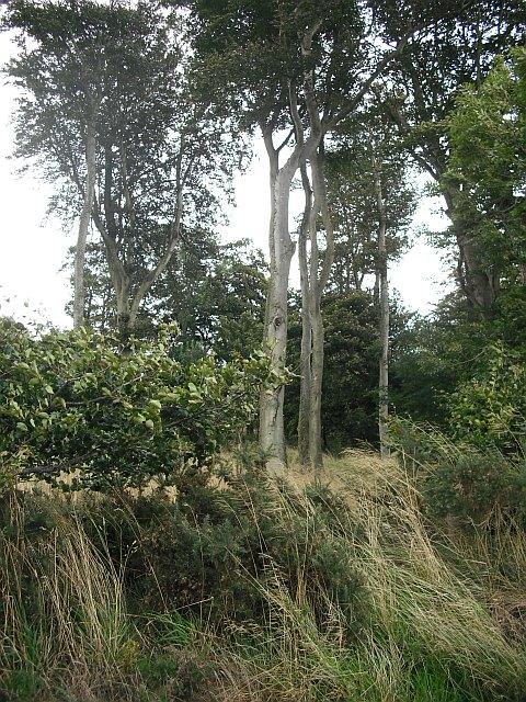 Woodland, Kirkside