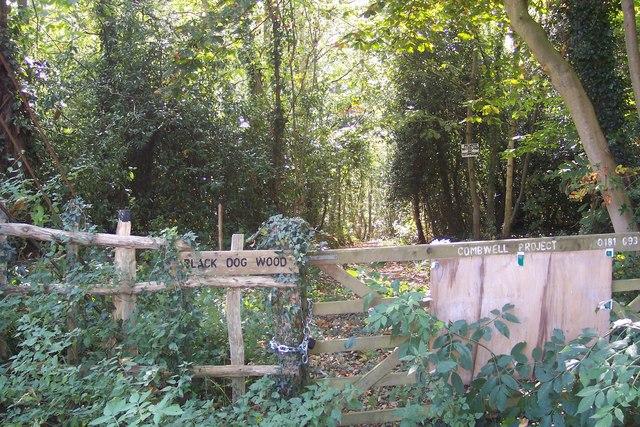 Track into Black Dog Wood