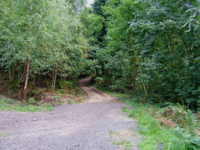 Forestry track off the North Worcestershire Path, Eymore Wood