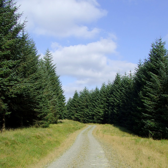 Tywi Forest west of Dolgoch Hostel, Ceredigion