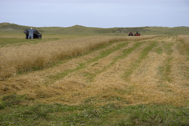 Crofting agriculture on the machair