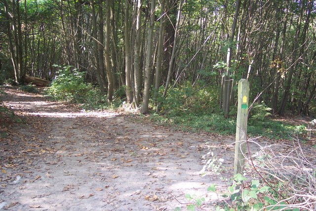 Footpath junction in Kilndown Wood