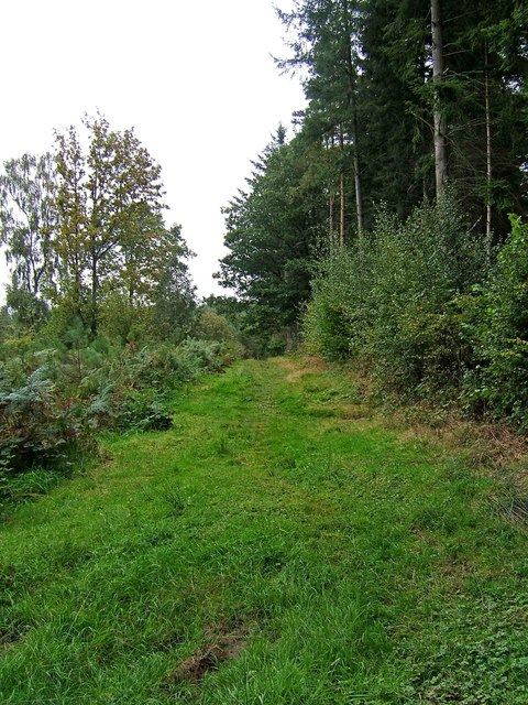 Grass footpath in Eymoor Wood