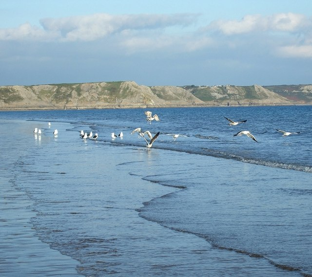 Seagulls at Oxwich Bay