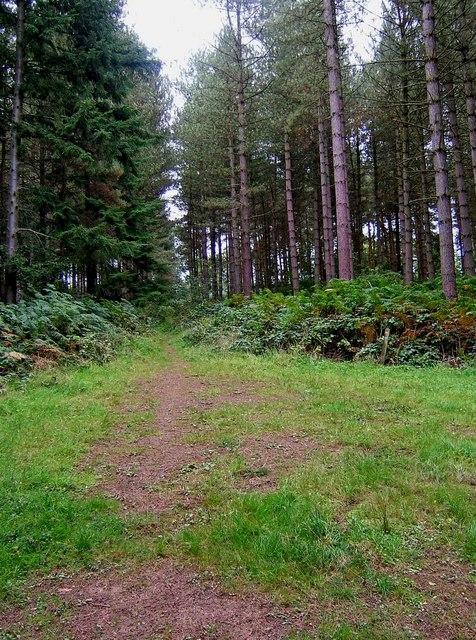Overgrown footpath in Eymore Wood