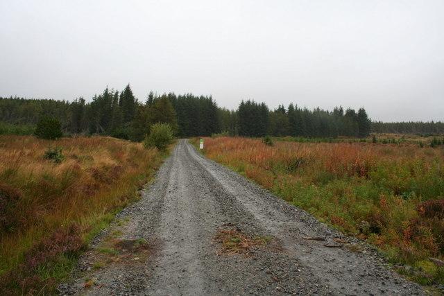 Freedom to roam in Dalchork Wood
