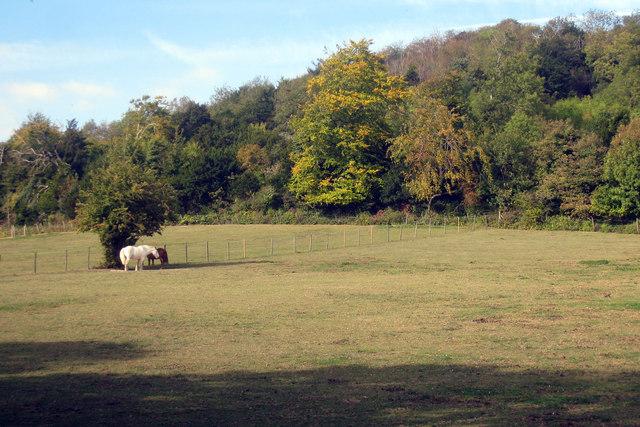 Horses off Pilgrims Way
