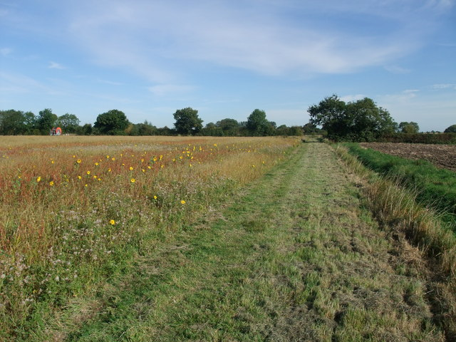 Hay field with small sunflowers