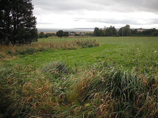 Grassland, Lauriston