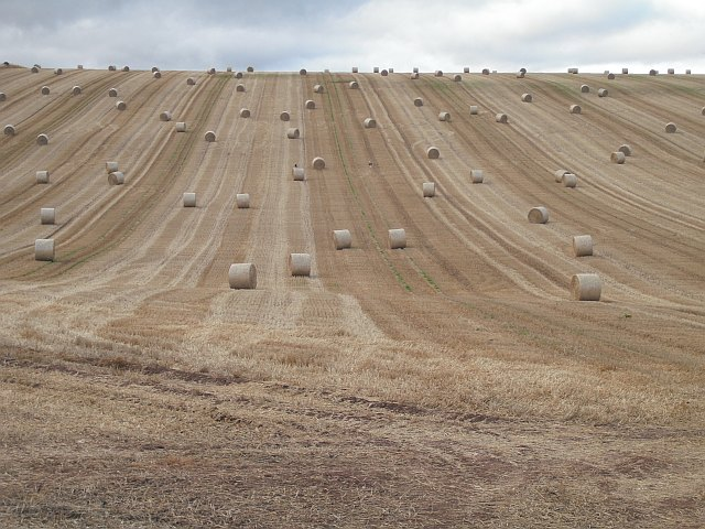 Stubble and round bales