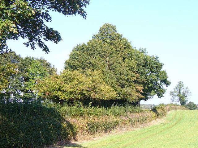 Field Near Tenements Farm
