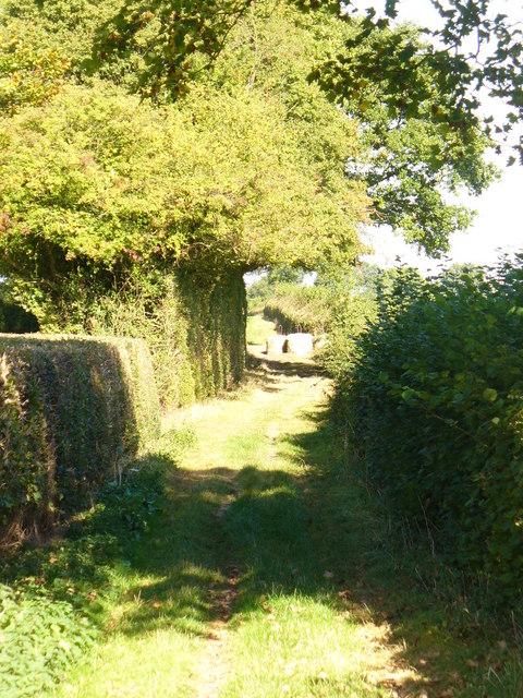 Footpath by Tenements Farm