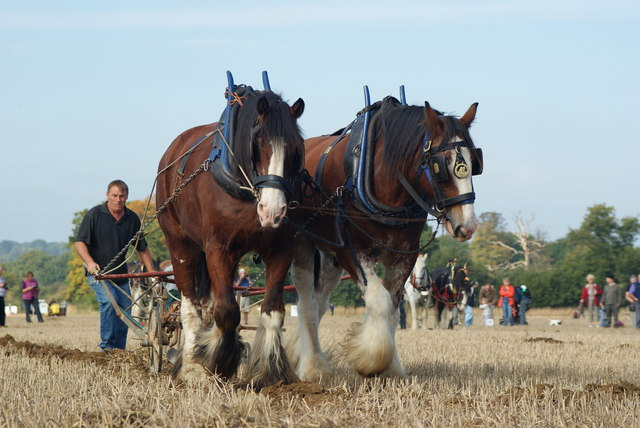 Surrey County Ploughing Match 2009 (4)