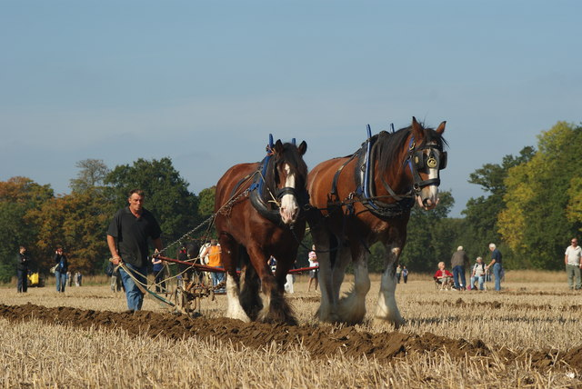 Surrey County Ploughing Match 2009 (5)