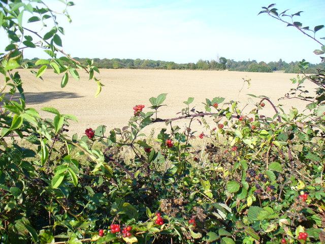 Field by Barnes Lane