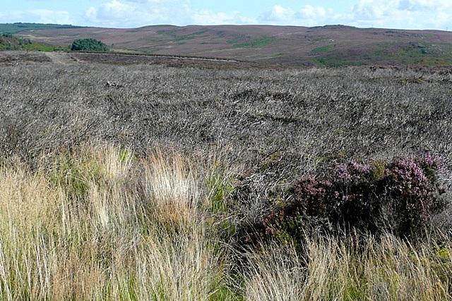 Moorland near Debdon