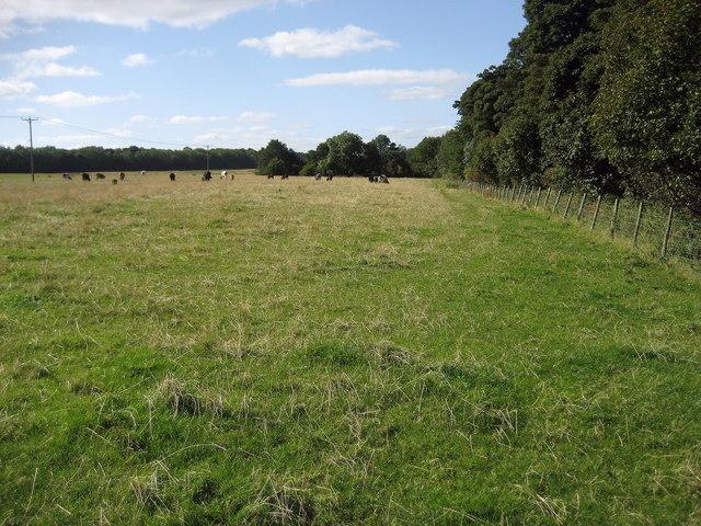 Beside Towlerhill Wood