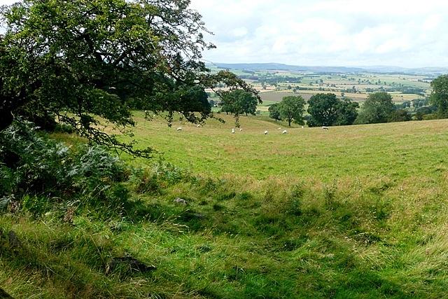 Pasture off Physic Lane