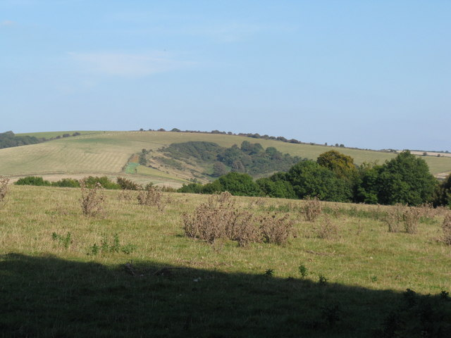 Rough pasture on hill above Windlesham House School