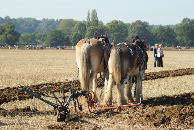 Surrey County Ploughing Match 2009 (7)