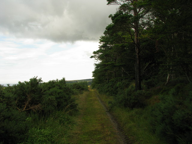 Track North of Moss Hill Plantation
