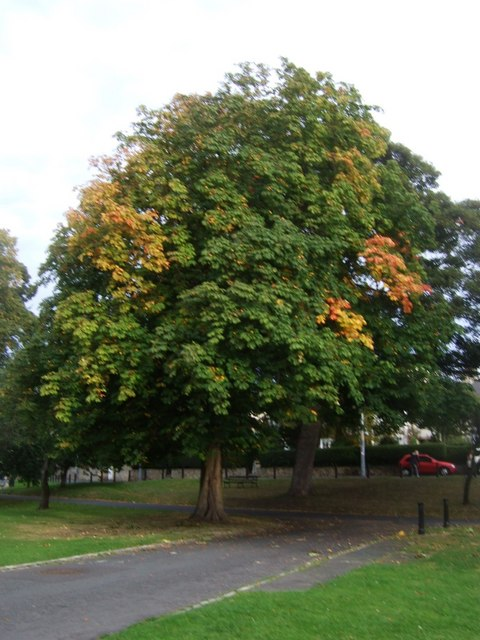 Early autumn foliage on The Green