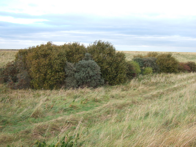 Copse near the outfall of Lutton Leam