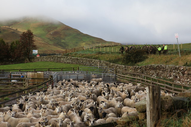 Penned in at Castlelaw Farm