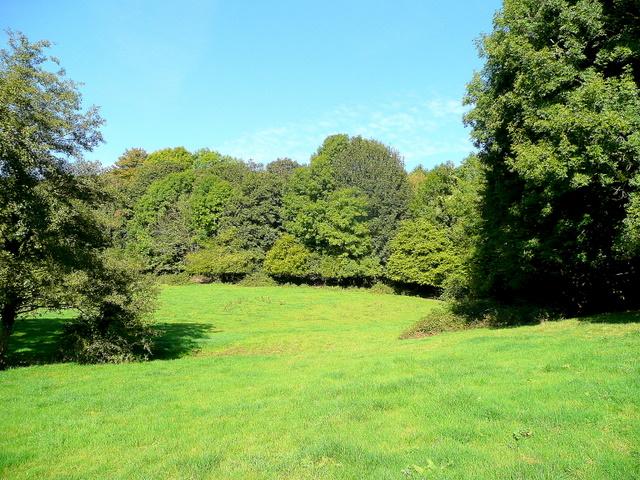 Edge of Flaxley Woods